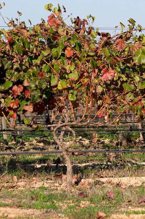 cordon double training irrigation tubes herdade do peso alentejo portugal