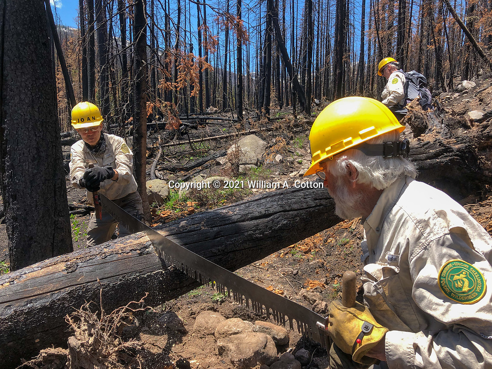 Poudre Wilderness Volunteers cut a downed tree on the Blue Lake Trail, June 8, 2021, the spring after the Cameron Peak Fire.
