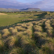 """This area outside of Saligo is known as a It would  be considered a """"commonage"""" which means 10 farmers share the grazing rights - but grazing  stock numbers are restricted by Sac (special are sf conservation) guidelines. Ireland."""