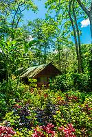Kibale Forest Camp, Kibale, Uganda.