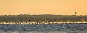 Athletes swim in Lake Monona during the 2014 Ironman Wisconsin triathlon. (Photo © Andy Manis)