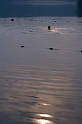Person swimming alone at dusk