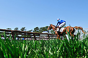 27 March 2010 : REGALITY makes a mistake early in the timber race with John Delaney in the irons.