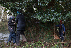 Denham, UK. 4 February, 2020. Activists from Save Colne Valley and Extinction Rebellion and a child record the measurements and location of a 11.6m-wide ancient alder tree in an area designated for the HS2 high-speed rail link next to the river Colne in Denham Country Park. Planned works in the immediate vicinity are believed to include the felling of 200 trees and the construction of a roadway, Bailey bridge, compounds, fencing and a parking area. The far side of the river lies within a wetland nature reserve adjacent to a Site of Metropolitan Importance for Nature Conservation (SMI).