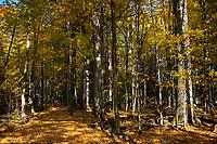 10.2014 zdjecie ilustracyjne N/z szlak turystyczny Carska Tropina w Puszczy Bialowieskiej fot Michal Kosc / AGENCJA WSCHOD