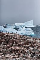 Gentoo Penguins on Cuverville Island, Antarctica.