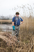 Harvesting the Reed beds of the Shannon Estuary.