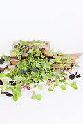 different Micro Greens (or microgreen, Micro leaves) on white background