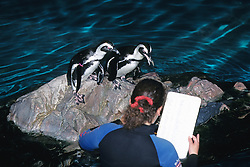Feeding Emperor Penguins, New England Aquarium