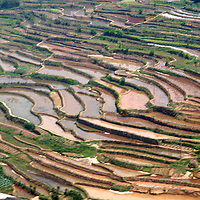Asia, China, Sichuan Province.  Terraced rice paddies shape the rural landscape outside Chongqing.