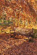 Park bench in golden leaves