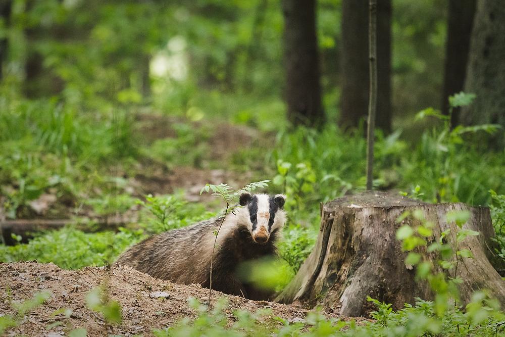 Photo by Davis Ulands   davisulands.com