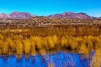 Bosque del Apache National Wildlife Refuge, near Socorro, New Mexico USA