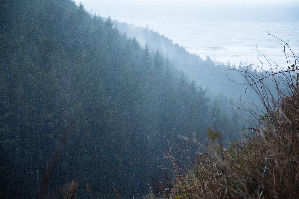 Elk hunting on the Oregon coast.