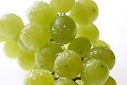Druiven - Grapes
