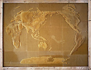 "Artist works with Bees To Create Beautiful maps of the the world using bees wax<br /> <br /> Ren Ri cooperated with bees to create art works"" Yuansu series"". Yuansu . Yuansu II, which is built on acrylic boxes, is the art work made when cooperating with bees.<br /> <br /> Ren Ri  said ""I change the gravity direction of the honeycomb every seven days by rotating the box. In the whole Yuansu series, I try to eliminate the absolute domination of the artist. Bees cooperating with artist can be seen as a relationship between human and nature'<br /> <br /> Photo shows: World Map<br /> ©Ren Ri/Exclusivepix Media"