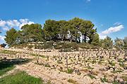 The hilltop with the small tower that has given its name to the domain. Mourvedre and Grenache Domaine de la Tour du Bon Le Castellet Bandol Var Cote d'Azur France
