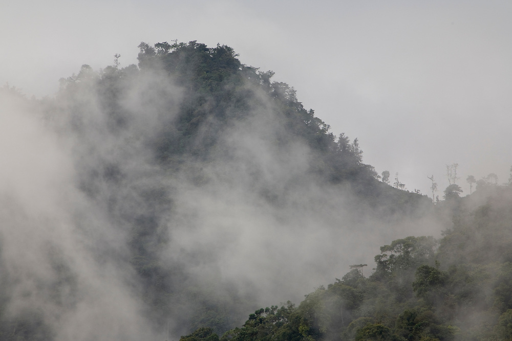 South America, Ecuador.  Clouds swirl over cloudforest high in the mountains in Maquipucuna Biological Reserve, 4500+ hectares purchased by The Nature Conservancy.