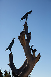 sculpture of crows found in New Mexico