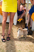 Amy Molyneaux with her dog Bobby, Veuve Clicquot Gold Cup, Cowdray Park, Midhurst. 21 July 2013