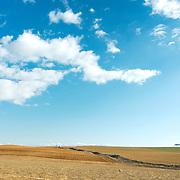 Cereal field at the plains of Castilla y León, Spain.