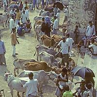 Weekend cattle market at Mirpur near Dhaka, Bangladesh.