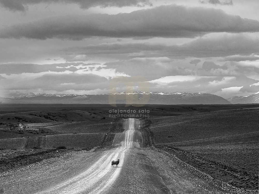 From the Patagonia Unknown Book series based on the unique and stunning work in black and white about Southern Patagonia, Argentina 2005-2013. Signed and editioned prints available at 50x40cm. Get and touch, for commercial uses or other sizes. Photographs by Alejandro Sala   Visit Shop Images to purchase and download a digital file and explore other Alejandro-Sala images.