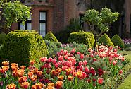 Chenies Manor Tulips