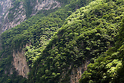 Lush limestone cliffs rise up to 1000 m (3300 ft) above the Grijalva River as it winds through Sumidero Canyon, a popular tourist destination in Chiapas state, Mexico on June 26, 2008.