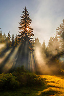 Sunbeams through the pine trees at sunrise by the lake