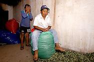 Packaging the harvest job, work, agricolture