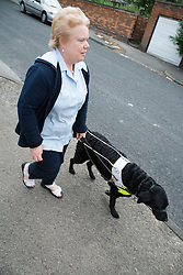 Visually impaired woman walking with guide dog,