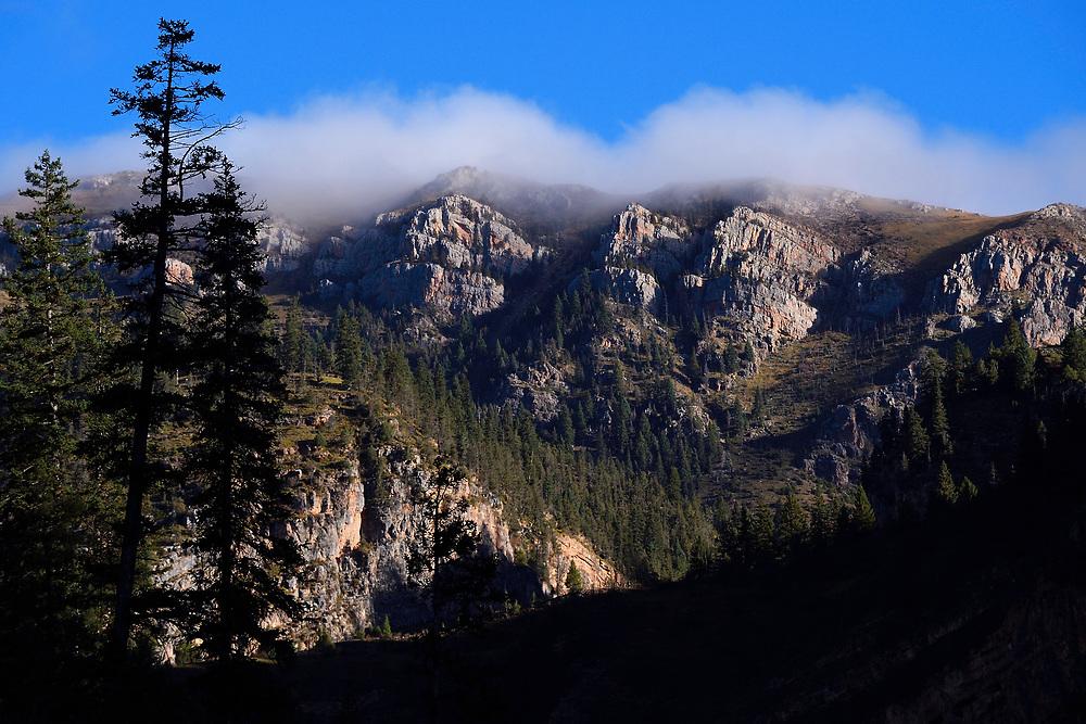 Nangqian Forest Reserve, Baixha Valley, Tibetan Plateau, Qinghai, China
