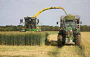 Machinery harvesting a crop of rye to be used as biofuel for electricity generation, Shottisham, Suffolk, England