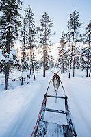 Reindeer sledding through boreal forests