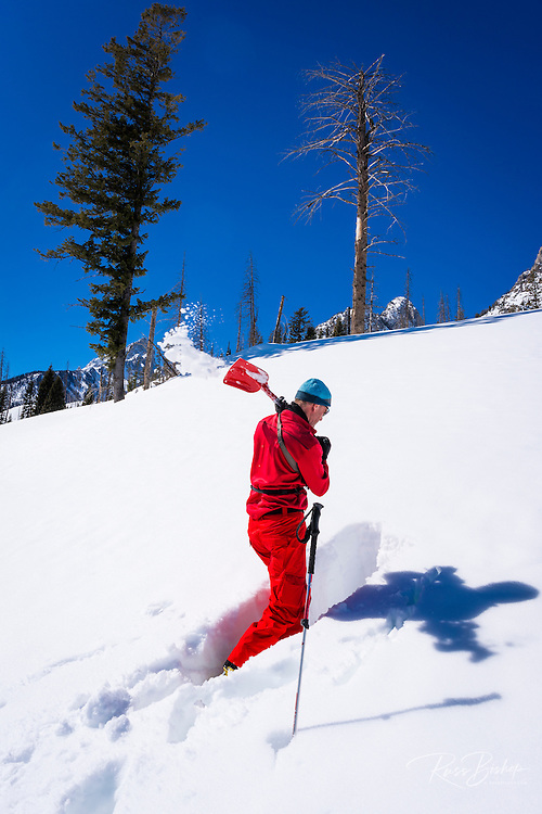Backcountry skier digging a snow trench to check snow conditions, Grand Teton National Park, Wyoming USA