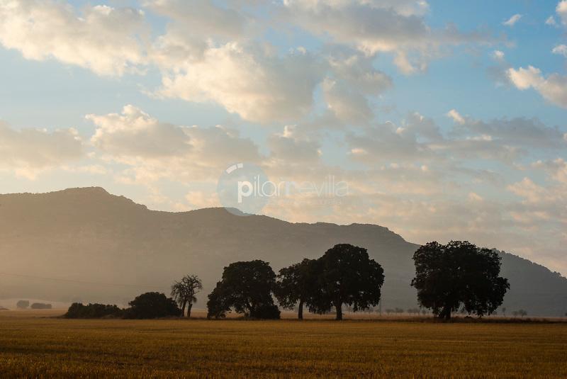 Encinas y nubes. Alpera. Albacete. España ©Antonio Real Hurtado / PILAR REVILLA