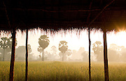 A rice paddy at sunrise, Siem Reap Province, Cambodia