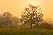 Morning fog and deciduous trees<br /> Argyle<br /> Manitoba<br /> Canada