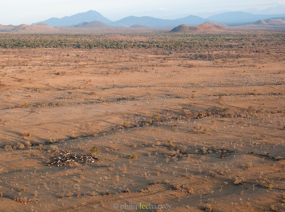 Aerial view of Arfican plains with grazing cattle, Chyulu Hills National Park, Kenya