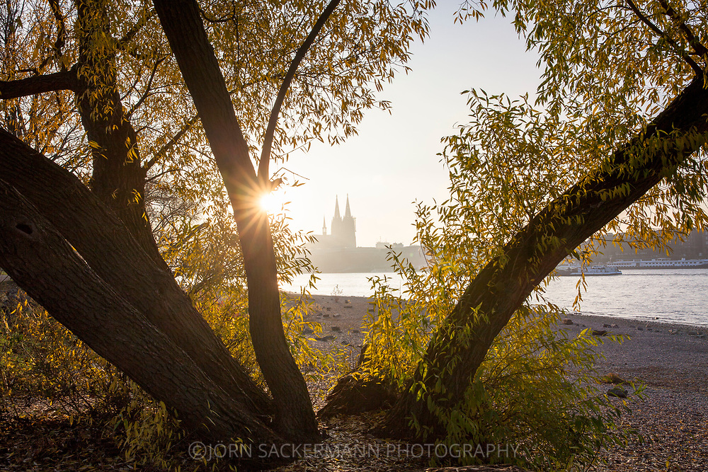 tree at the banks of the river Rhine in the district Deutz, view to the cathedral, Cologne, Germany.<br /> <br /> Baum am Rheinufer in Deutz, Blick zum Dom, Koeln, Deutschland.