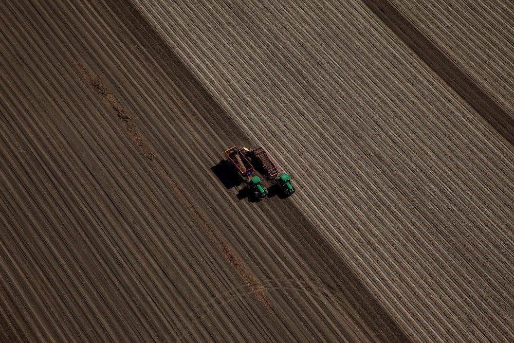 Nederland, Gemeente Noordoostpolder, Ens, 08-09-2009. Mechanisatie in de landbouw, oogsten aardappels door middel van machines. Op het gedeelte rechtsboven is te zien hoe de aardappel nog bedekt zijn met een laagje grond (het aanaarden). Voren op akker..Mechanization in agriculture, harvesting potatoes by machine. Furrows on the fields.(toeslag); aerial photo (additional fee required); .foto Siebe Swart / photo Siebe Swart