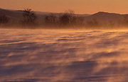 Snowy Landscape showing windy weather, snow blowing, misty, soft colours