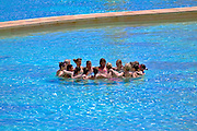 Egypt, Sinai, A group of adult tourists having fun in the swimming pool of a resort hotel