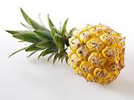 Whole fresh pineapple