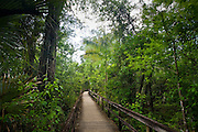 Big Cypress Bend boardwalk at Fakahatchee Strand, the Everglades, Florida, United States of America