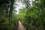 Big Cypress Bend boardwalk at Fakahatchee Strand, the Everglades, Florida, United States of America