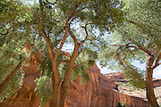 Canyon de Chelley National Monument, Arizona, USA