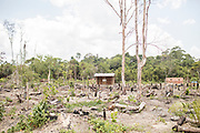 The practice of clear-cutting the rainforest leaves topsoil prone to the elements, where it eventually washes away and exposes the sandy layers beneath that then act as the perfect incubators to the flys that carry leishmaniasis.