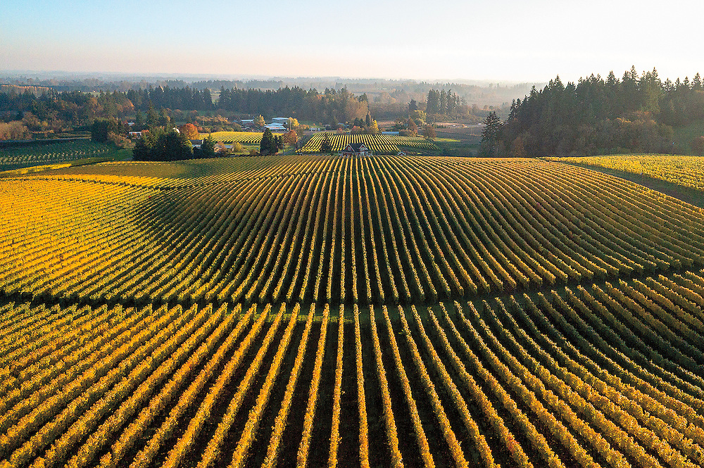 A low level aerial perspective of the Sokel Blosser vineyards, in the Dundee Hills of Oregon, offers a sweeping view of the surrounding landscape.